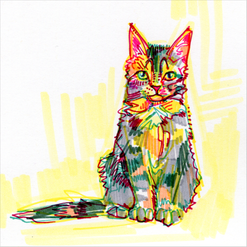 chat maine coon dessin