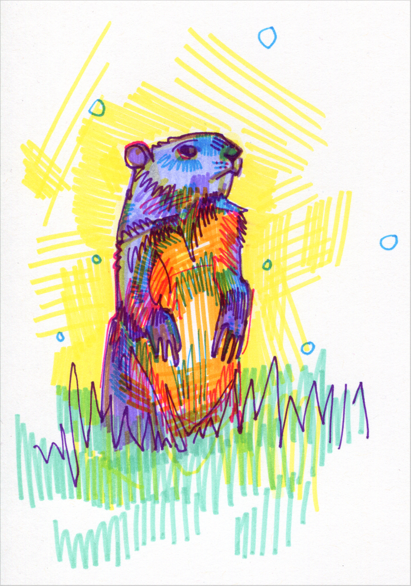groundhog colorful drawing