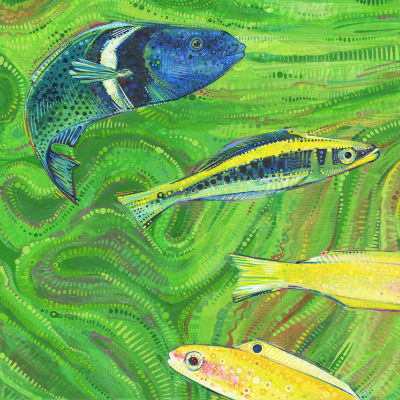 bluehead wrasse, fish art for sale