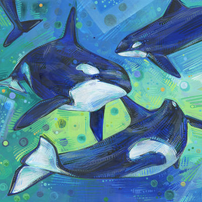 orcas playing together, painted in acrylic