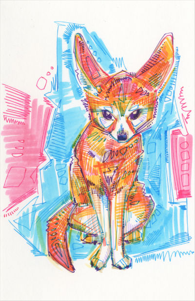 fennec fox drawing by wildlife artist Gwenn Seemel