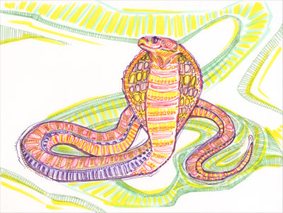 cobra dessin