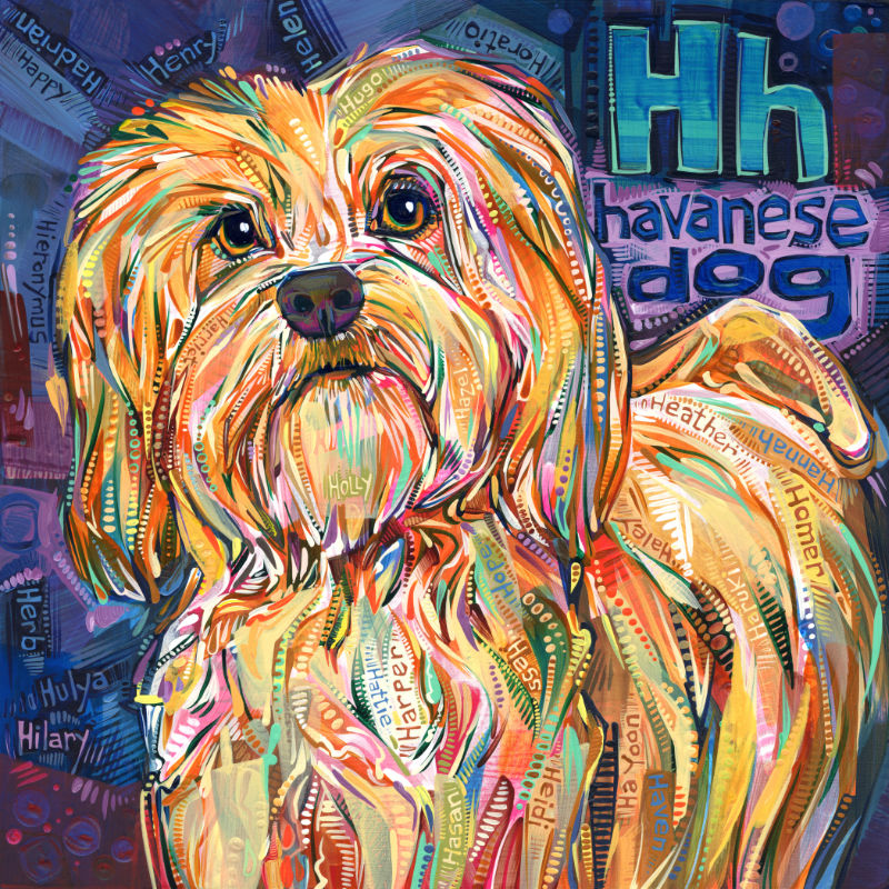 Havanese dog, pet portrait